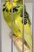 birds-rein-dul-011