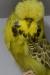 Jonge vogels 2011 deel 1