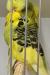 birds-rein-dul-008
